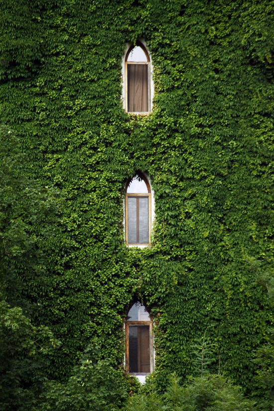 green-windows-4550