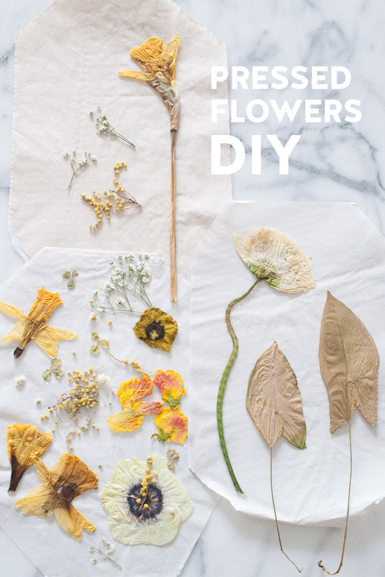 pressed flower DIY | alyssa hoppe for designlovefest